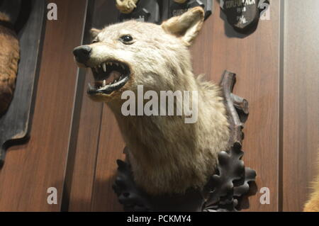 The 'august von spiess' museum of hunting - Stock Photo