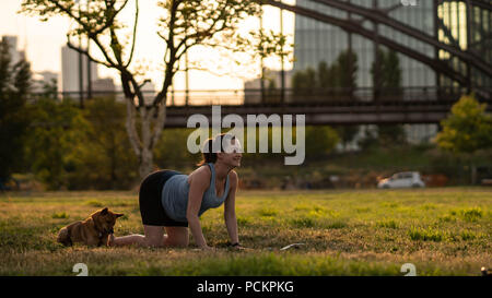 Beautiful sporty fit yogini Pregnant woman practices yoga asana bitilasana - cow pose gentle warm up for spine (also called cat-cow pose) in in a park with a dog - Stock Photo