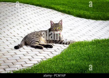 The cat lies on the sidewalk in the shade of the trees. - Stock Photo