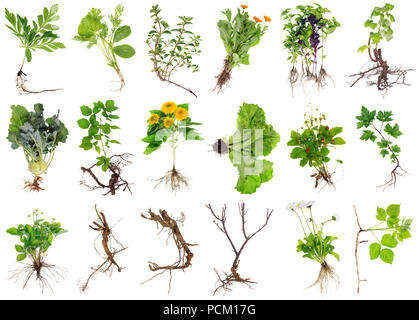 Various garden plants and flowers with roots. Isolated on white studio set - Stock Photo