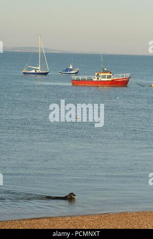 paddlingThorpe Bay, Southend-on-Sea, Essex, UK. 3rd August, 2018. UK Weather: Morning views on the beach at Thorpe Bay - a view of a Dog swimming Credit: Ben Rector/Alamy Live News - Stock Photo