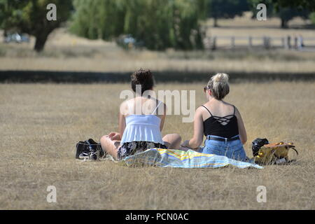 Richmond Park, London, UK, 3rd August 2018, Weather: Very hot on Friday afternoon with temperatures around 33 degrees Celsius. The latest heatwave is brought from the south by a Spanish plume and could last for several days. People brave the heat or seek shade among the trees and parched grass. Credit: Paul Biggins/Alamy Live News - Stock Photo