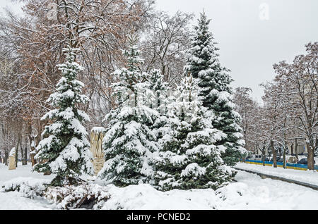 Cold January snow covered grove of young firs and acacia in the city garden - Stock Photo