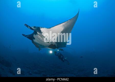 Scuba diver swimming with Giant oceanic manta ray (Manta birostris) with sharksucker (Echeneidae), San Benedicto Island, Revillagigedo-Inseln, Mexico - Stock Photo