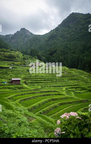 Maruyama Senmaida rice terraces in central Japan - Stock Photo
