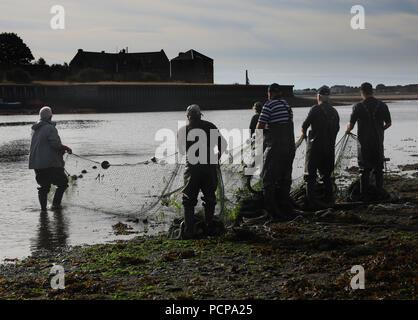 Traditional salmon fishermen at Gardo fishery on the River Tweed hauling in their net, Berwick upon Tweed - Stock Photo