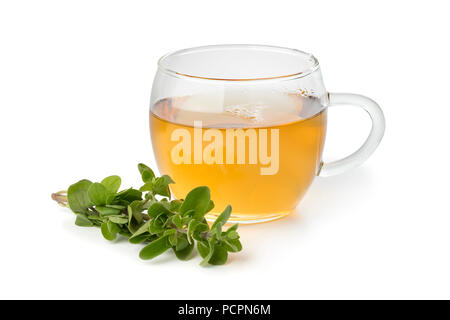 Glass cup of herbal tea and a twig of fresh marjoram isolated on white background - Stock Photo