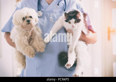 Vet with dog and cat in his hands - Stock Photo