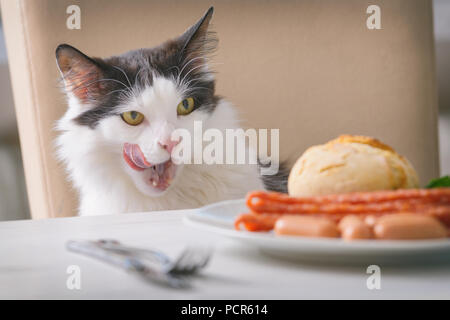 Cat tries to steal food from the table and licks herself - Stock Photo