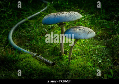 Large Mushrooms At Night With Garden Hose - Stock Photo