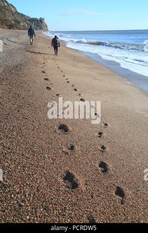 Couple walking along the shingle beach leaving footprints near village of Branscombe on the Jurassic Coast - Stock Photo