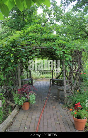 Brick paved path and overgrown garden pergola at The Kennicott Grove in suburban Glenview, Illinois on a summer day. - Stock Photo