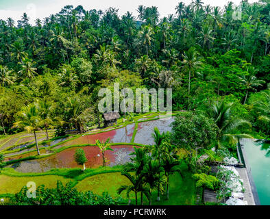 Hotel complex in a good city hotel in Ubud, palm trees, water areas, Ubud, Bali, Indonesia, Asia - Stock Photo