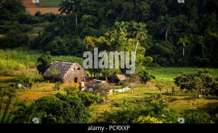 Farmhouse, farmer cottage, barn for drying tobacco leaves, tobacco fields and the mountains of the Mogotes, Viñales Valley with karst mountains, Viñales, Pinar del Río province, Cuba, North America, Cuba - Stock Photo