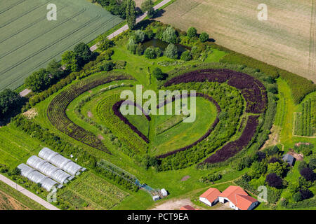 Horticultural company at Waltrop, heart-shaped tree and shrub nursery, Waltrop, Ruhr area, North Rhine-Westphalia, Germany - Stock Photo