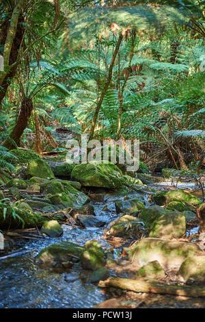 Landscape, Sherbrooke Creek, Sherbrooke Falls, Watercourse, Rainforest, Tree Fern (Dicksonia antarctica), Dandenong Ranges National Park, Melbourne, Victoria, Australia, Oceania - Stock Photo