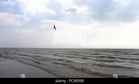 Coastline of sea with waves and flying bird in clouds. Video. Marine splash of waves on volcanic sand beach. Peaceful ocean coastline revealing big foaming waves washing the shore. Top scenery view of blue sea and beautiful sky with clouds in summertime - Stock Photo