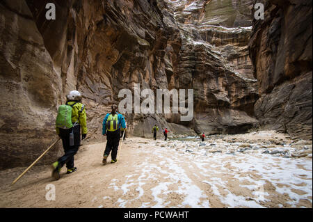 Hiking Zion National Park's famous slot canyon, The Narrows, in winter requires a dry suit and warm clothes. It's much less crowded than in the summer. - Stock Photo