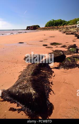 Dawlish Warren beach near Langstone Rock, showing rock armour along the sea wall. - Stock Photo