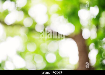 Blurred foliage background - Stock Photo