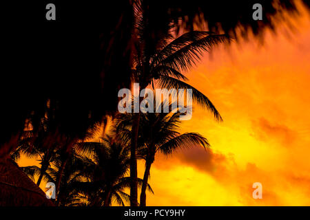 Beach palm trees on a deserted tropical beach silhouetted against a beautiful bright yellow sunset or sunrise over the caribbean ocean - Stock Photo