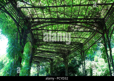 Wisteria pergola in the beautiful Conservatory Garden which is the only formal garden in Central Park, Manhattan on JULY 4th, 2017 in New York, USA. ( - Stock Photo