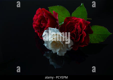 A rose is a woody perennial flowering plant of the genus Rosa, in the family Rosaceae, or the flower it bears. There are over three hundred species an - Stock Photo