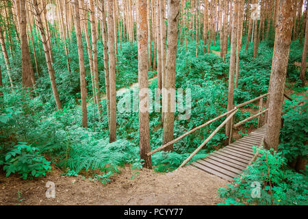 The wooden path leading through a green forest. View on tourist wooden pathway among trees and grass. Russian nature. - Stock Photo
