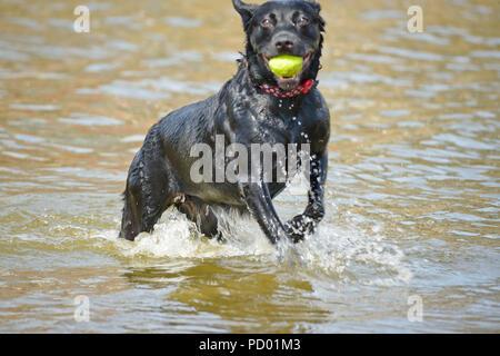 Dog making a splash in lake - Stock Photo