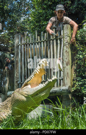 Crocodile feeding at St. Augustine Alligator Farm Zoological Park in St. Augustine, Florida. (USA) - Stock Photo
