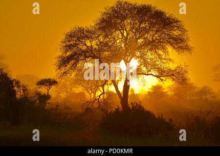South Africa, a fantastic travel destination to experience third and first world together. Ethereal sunrise on misty morning in Kruger National Park. - Stock Photo