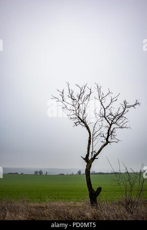 Low lying fog across lowlands with silhouette of winter wild plum bare bald tree and background of hazy green field and hills near Dimitrovgrad, Bulgaria - Stock Photo