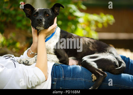 Younf woman combing out the fur of a black dog in her garden - Stock Photo