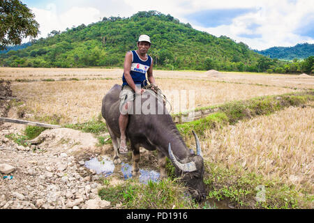PALAWAN, PHILIPPINES-MARCH 28. 2016: Philippines ride the Carabao a domesticated subspecies of the water buffalo on March 28, 2016. at Palawan, Philip - Stock Photo