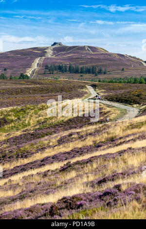 North Wales, UK Weather: Hot and sunny for many today with the hottest day of the weekend and a final burst of summer weather before rain encroaches through the week. With a hot day ahead, walkers head out early along the Offa's Dyke Path in the Clwydian Range with the purple flowering heather in full bloom towards the highest point Moel Famau, on the boarder of Denbighshire and Flintshire, Wales, - Stock Photo