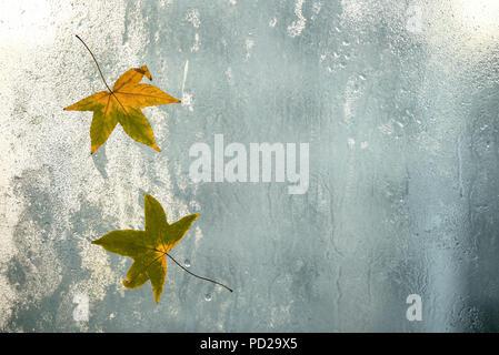 Autumn leaves and raindrops on window glass, autumn weather. Seasonal autumn background. - Stock Photo