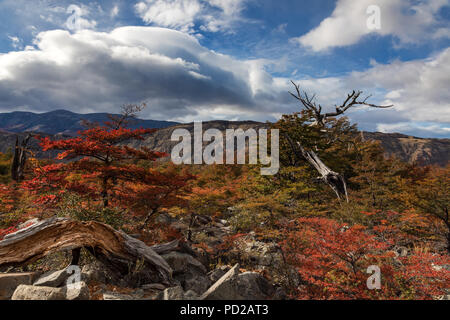 Beautiful colorful trees in autumn at Los Glaciares National Park, Patagonia, Argentina - Stock Photo