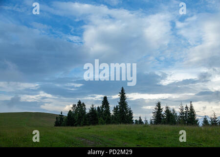 Hills with green grass and fir trees in summer against the blue sky and white clouds. Minimal nature background. - Stock Photo
