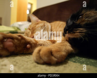 two cats resting on sofa in a living room - Stock Photo