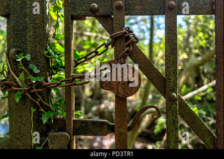 close upof a rusty padlock and chain on an old iron gate, - Stock Photo