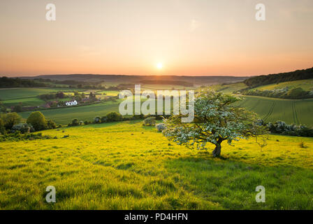 An idyllic English countryside scene at sunset; a lone tree overlooks a cottage in the North Kent Downs. - Stock Photo