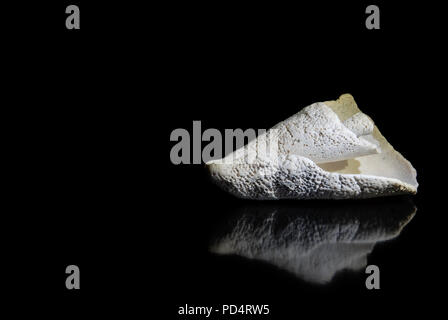 Beautiful white seashell with reflections on black background with text space on left - Stock Photo