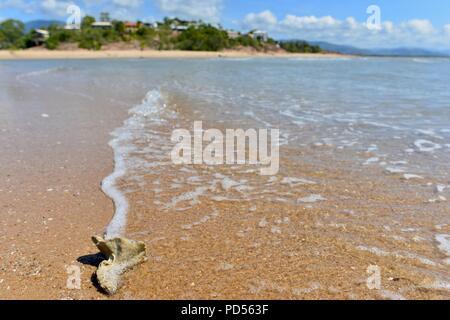 Toomula as seen from beach, Toomulla QLD, Australia - Stock Photo
