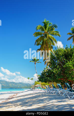 perfect empty Caribbean tropical sandy beach with clear water and green palm trees - Stock Photo