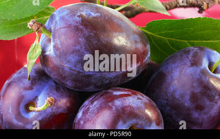 Ripe plums and a tree branch in a plate - Stock Photo