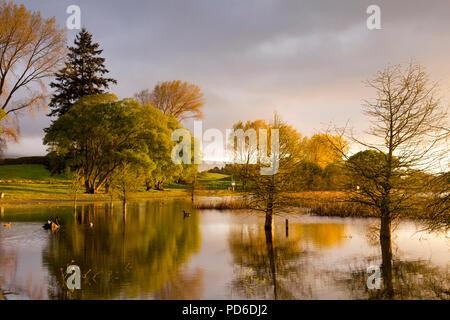 Guy Roe Reserve, Lake Rerewhakaaitu, Rotorua, New Zealand, in beautiful early morning light. - Stock Photo