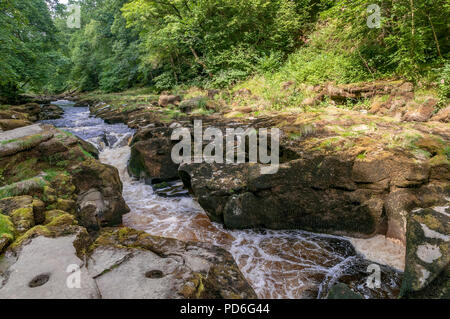Bolton Abbey. West Yorkshire. River Wharfe. The Strid waterfall. Strid Wood. - Stock Photo