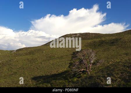 Scots Pine amid Dramatic Rugged Landscape of Beinn Eighe by Kinlochewe. Mountainous Scottish Highlands in Summer. Torridon, Scotland, UK. - Stock Photo