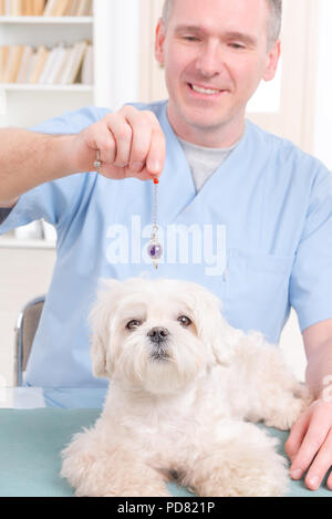 Alternative medicine therapist or vet using pendulum to check dog's health - Stock Photo