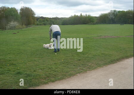 Cockerpoo dog and man in park - Stock Photo